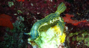 Why Nudibranch Are My Favourite Underwater Creature
