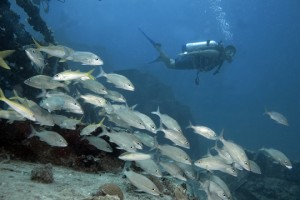 Dive Anguilla 1