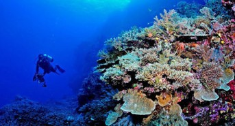US-based dive tour operator Liquid Diving Adventures offering deal on Fiji dive trip