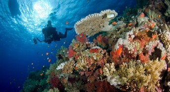 Go on a Northern Red Sea Reefs and Wrecks Underwater Photography Workshop with Oonas Divers this October