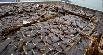 Shark fin ban may be in jeopardy due to giant US trade deal