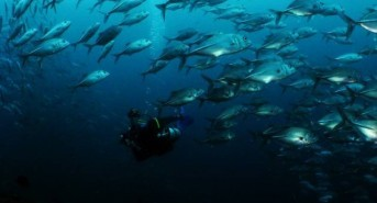 Spaces available for 2014 dive trips with Equator Diving