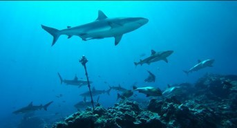 EXCLUSIVE: An interview with environmental filmmaker and creator of 360Heros interactive video 'For the Love of Sharks' Bill Macdonald by Jeff Goodman