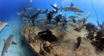 Dive Centre/Resort Of The Day: Scuba Sur Viva Diving Bahamas