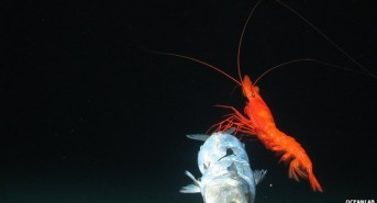 Images Reveal a Previously Unexplored Deep Sea Trench