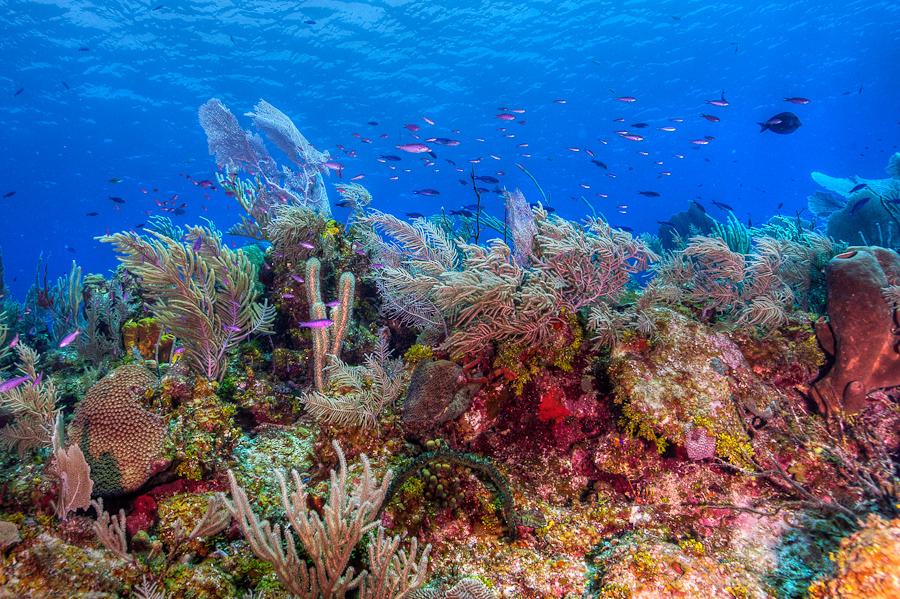 Cayman Islands Reef