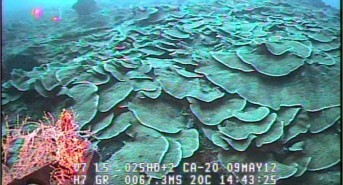 Rebreather Divers Discover Deep Coral Reef Activity