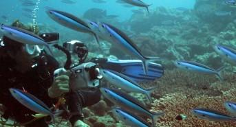 Planning a Maldives dive trip? Head south, says Scuba Tours Worldwide
