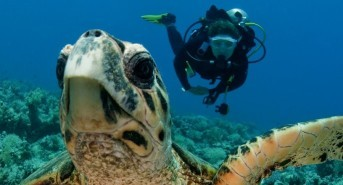 Check out the latest Red Sea diving deals from Emperor Divers