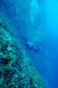 Cominotto Reef