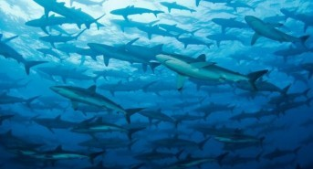 Join Equator Diving in the Pacific in 2016 and dive with the Big Fish