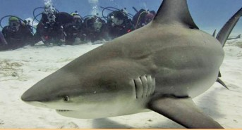 Ocean Sanctuaries to Collaborate with Australian 'Shark Base' Citizen Science Program