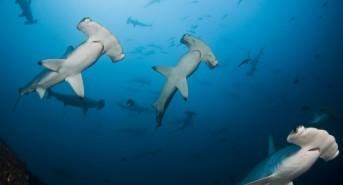 American Airlines Announces Shark Fin Shipment Ban