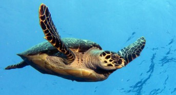 5 Reasons to take your next dive vacation in Cozumel
