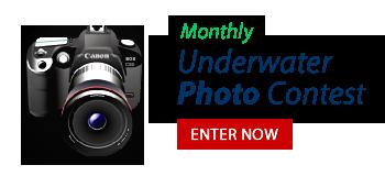 Enter Underwater Photo Contest