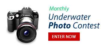 Enter Underwater Photo Contest
