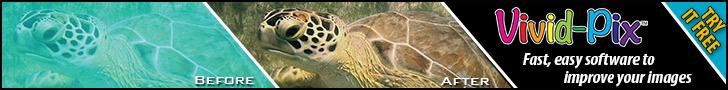 Vivid-Pix Turtle 728 x 90