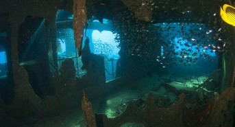 Latest Red Sea dive holiday offers from Oonasdivers