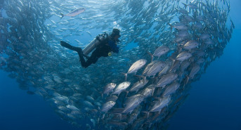 Jim & Cary Yanny's Guide to Diving in Indonesia