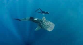 Boutique Beach: New Maldives Hotel in Whale Shark Region