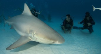 It's bull shark season and time for Shark School with Pro Dive Mexico