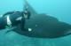 Three-fold Success for the Marine Megafauna Foundation