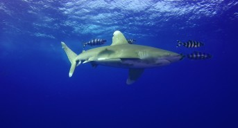 Red Sea Diving Safari Video Competition Results