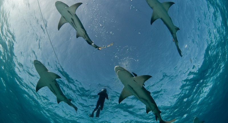 Head to the Bahamas and take advantage of a great fly free offer from Dive Worldwide