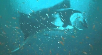 Constellation Fleet crew come to the rescue of marine life again (watch video)