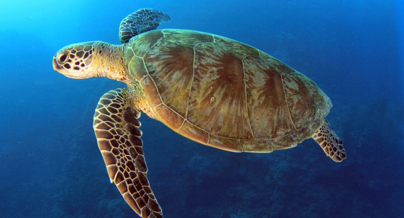 Join a Coral Sea Safari and save £100 per person with Dive Worldwide