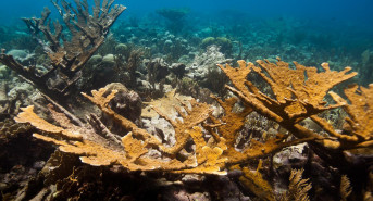 Lab-Grown Coral – The Latest Plan To Save Earth's Reefs