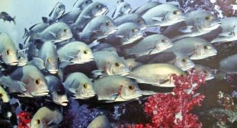 Dive Trip Report: Oman