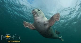 Amazing Wildlife Encounters: Farne-tastic Diving