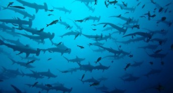 Enjoy great savings on Galapagos liveaboards with Ultimate Diving