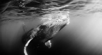 whale-5.jpg