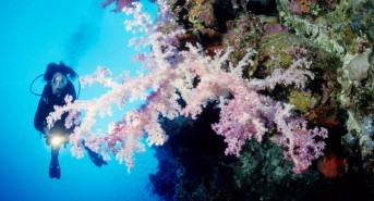 Dive into the depths of Somabay and enjoy an unparalleled scuba experience