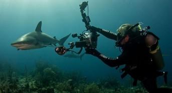 SharkFest UK 2016 line up announced