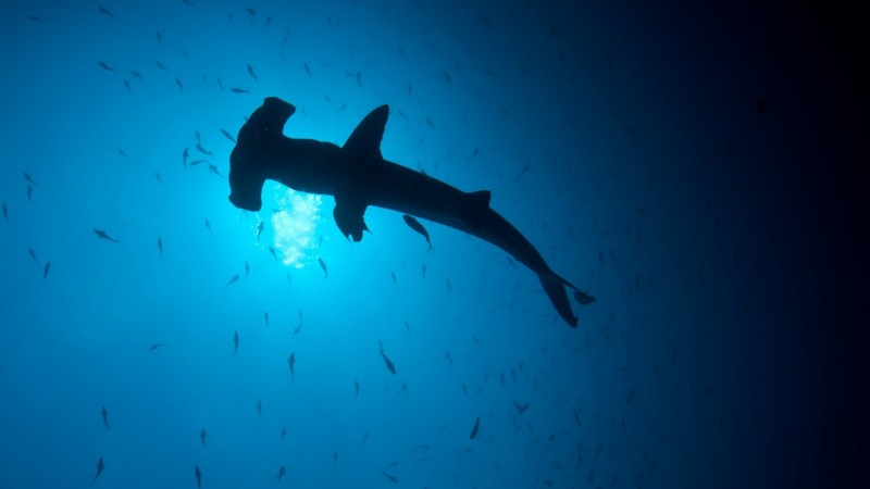 Make huge savings on a Costa Rican Liveaboard adventure with Dive Worldwide