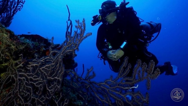 Divetech Offers Thrilling Dive Expedition to Remote 12-Mile Bank Often Called the 4th Cayman Island