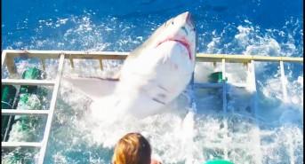 great-white-breaches-shark-cage-1.jpg