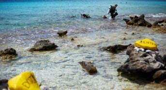 Dive into savings with Bonaire's DEMA show specials