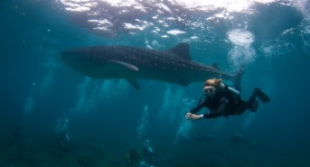 New for 2017: Deep South & Southern Sharks with Emperor Maldives