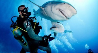 Best Locations for Shark Encounters in 2017