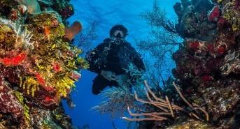 NAUI Expands Its Reach with New Dive Destinations