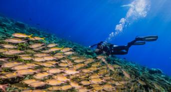 MaldivesMarchOrion2013-650-41-e1484137029911.jpg