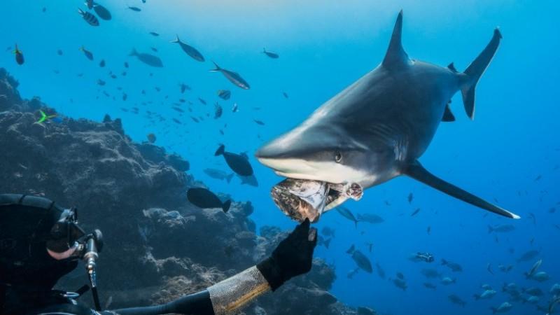 The Shark Whisperers of Beqa Lagoon