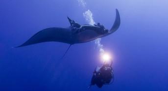 Regaldive Trip Report: Socorro Islands Liveaboard