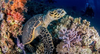 Announcing the Winners of Scubaverse.com's January 2017 Photo & Video Contests
