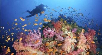 0317-Volivolvi-Fiji-e1489005172309.jpg
