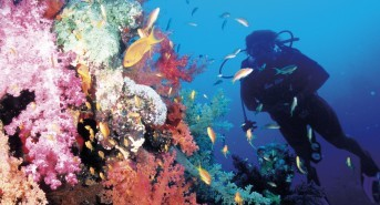 Red Sea Resorts: The Beautiful South